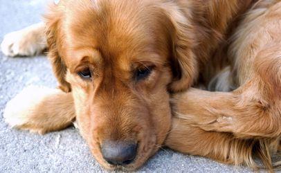 Euthanasia Drug in Dog Food Brands 1